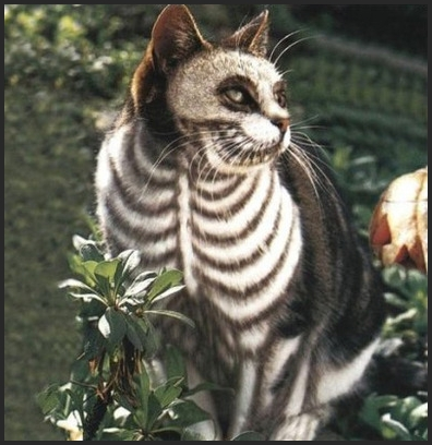 cat-skeleton